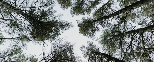 Forests are a model for organisations